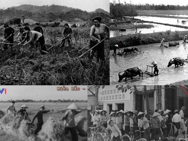 Phong trào Hợp Tác Xã Vietnam